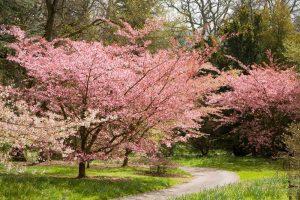 Batsford Arboretum near Haeth Farm Holiday Cottages